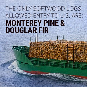 The only softwood logs that are allowed entry into the U.S. are the Monterey Pine