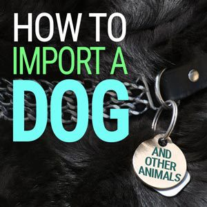 How to Import a Dog | Customs Bonds | USA Customs Clearance
