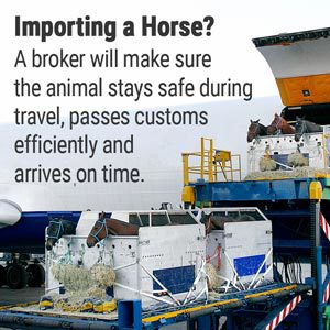 Want to Know How to Import a Horse from Europe