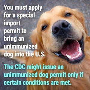 dog permit online
