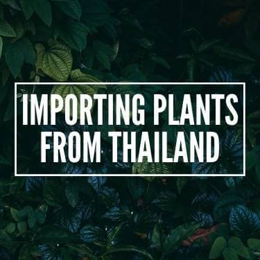 Importing Plants From Thailand