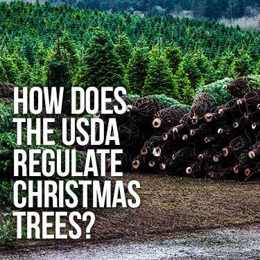 How Does the USDA Regulate Christmas Trees?