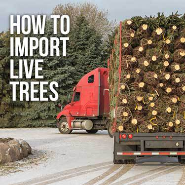 How to Import Live Christmas Trees