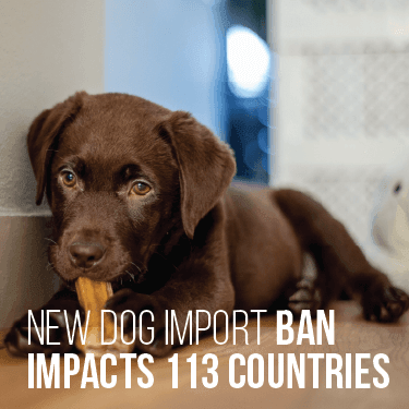 New Dog Import Ban Impacts 113 Countries